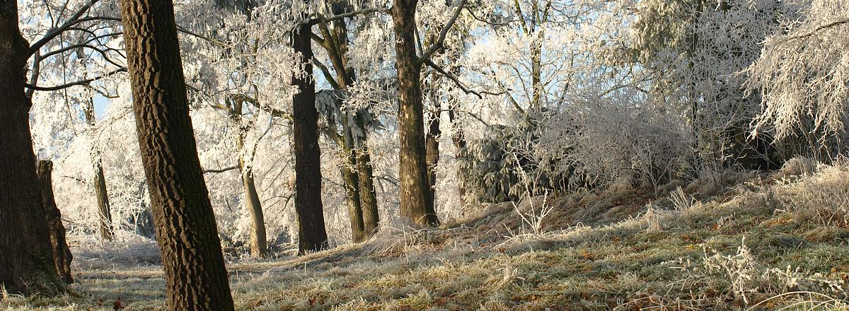 Obec Kravsko - okolí Kravsko zima